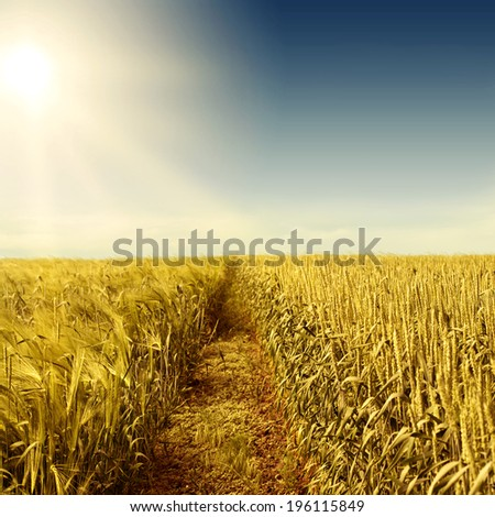 Wheat field, the sun and the road. - stock photo