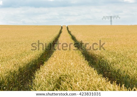 wheat field under a cloudy sky, with leading tracks to the horizon, Germany - stock photo