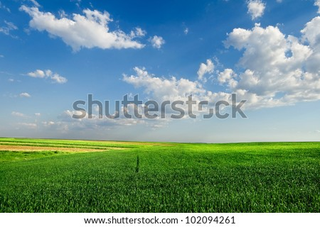 Wheat field under blue sky with clouds - stock photo