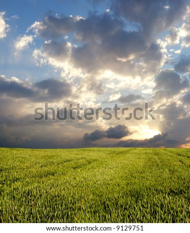 Wheat field under dark clouds - stock photo