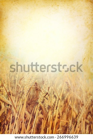 Wheat field with empty copy-space and frame for your text - agricultural and food concept in retro style. Paper texture background with a cereals field. - stock photo