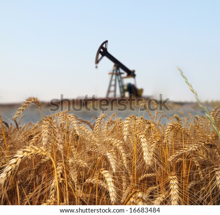 Wheat field with oil pump on the background