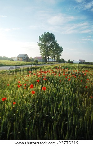Wheat field with red poppies in the countryside of Romania.