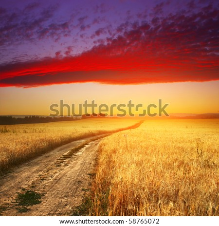 Wheat field with road and sunset sky with clouds - stock photo