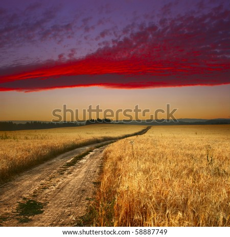 Wheat field with road and sunset sky with clouds