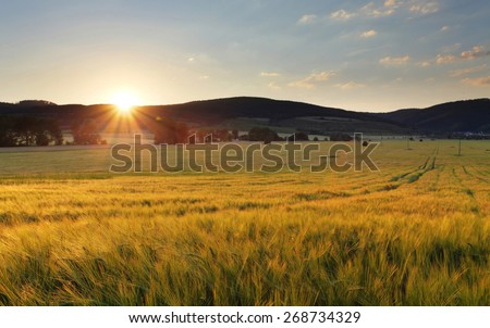 Wheat field with sun and mountain - stock photo