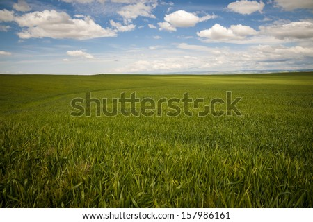 Wheat fields under a summer clouds in Washington State - stock photo