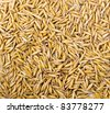 wheat grain background - stock photo