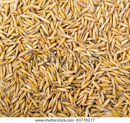 wheat grain background - stock photo