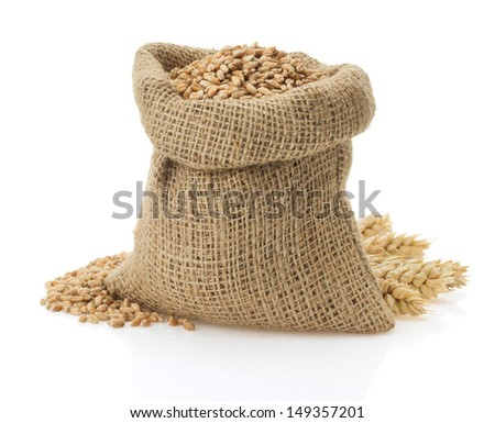 wheat grain isolated on white background - stock photo
