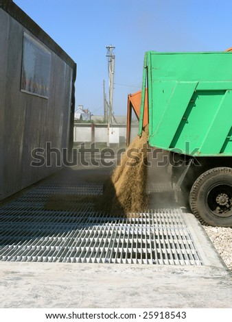 Wheat grain loading in a granary - stock photo