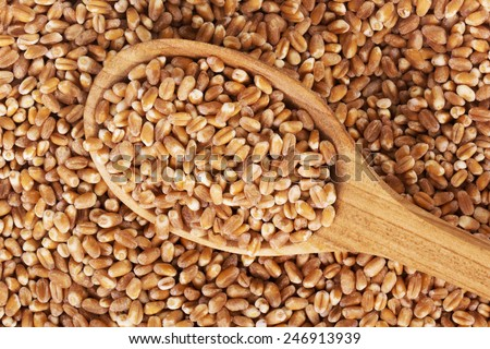 wheat grain on a wooden spoon - stock photo