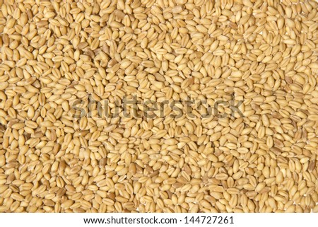 Wheat grains as background - stock photo
