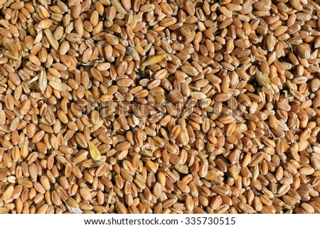 Wheat grains background