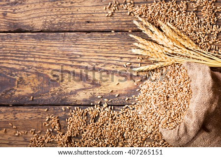wheat grains in sack on wooden table - stock photo