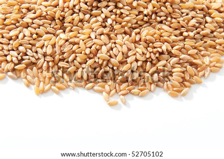wheat grains isolated on white background - stock photo