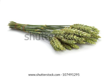 wheat grains on white background - stock photo