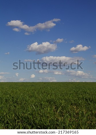Wheat grass field in the Palouse Prairie of Washington State along US route 2 Green wheat with blue sky and clouds with distinct level horizon whole grain agriculture farming row crops - stock photo