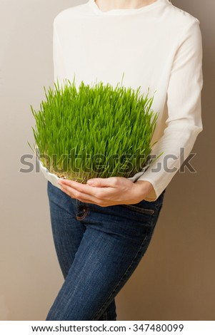 Wheat grass for juicing and healthy life. How to grow the best wheatgrass - Urban cultivation and gardening. - stock photo