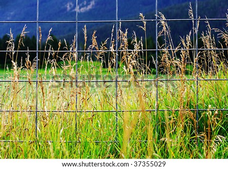 Wheat growing behind metal fence - stock photo
