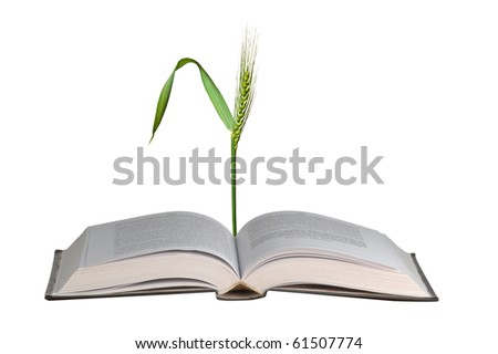 Wheat growing from book