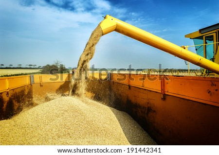 Wheat harvesting combine - stock photo