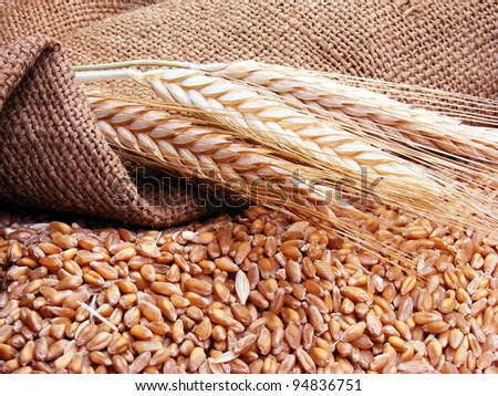 Wheat in burlap sack - stock photo