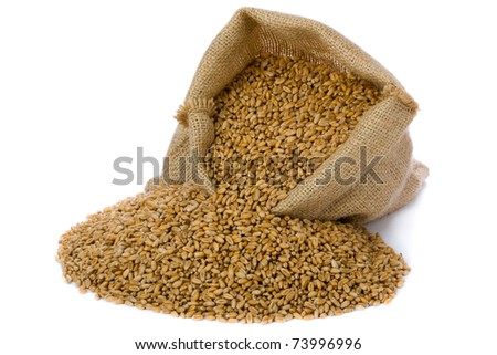 Wheat in small burlap sack - stock photo