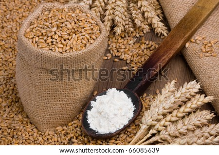 Wheat in small burlap sack and flour on old wooden spoon