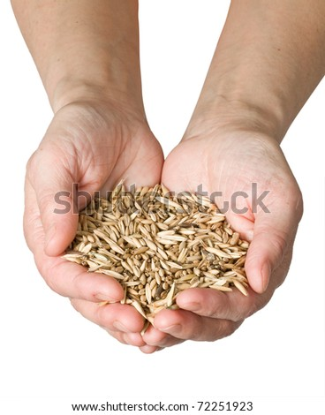 wheat in woman's hand isolated on white - stock photo