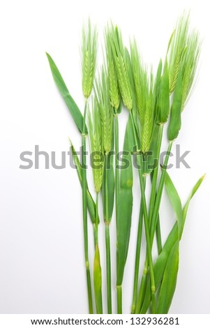 Wheat isolated on natural white background. - stock photo