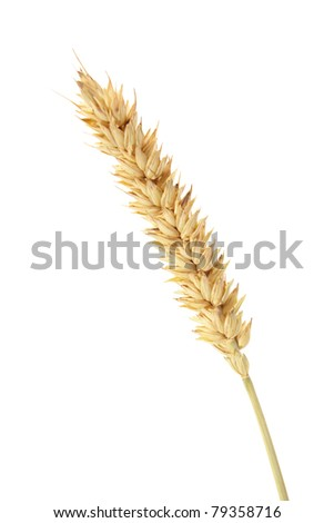 wheat isolated on white - stock photo