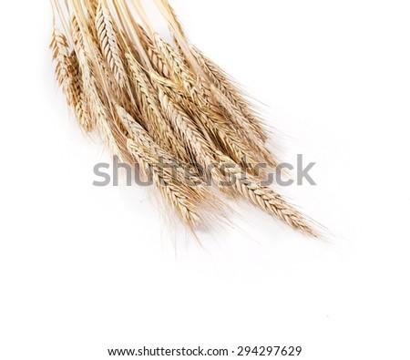 Wheat isolated on white background  - stock photo