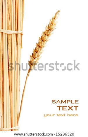 Wheat isolated on white with text - stock photo