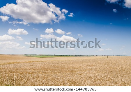 wheat land background