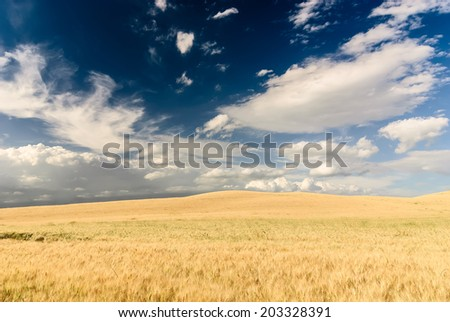 Wheat meadow with beatiful dramatic sky. Tuscan landscape, Italy. - stock photo
