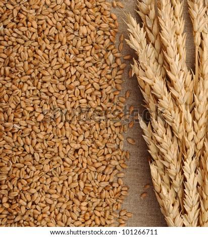 Wheat on sacking background - stock photo