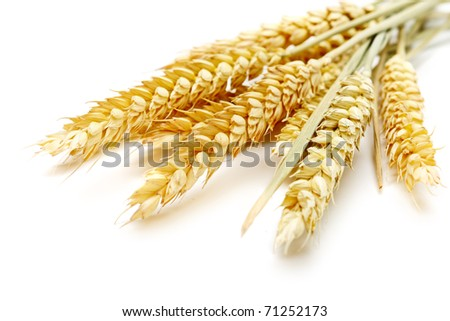 wheat on the white background