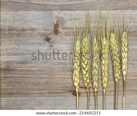 wheat on wooden background close up