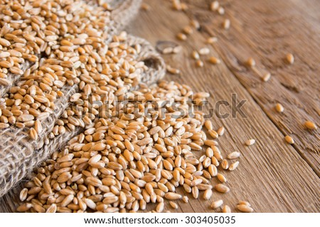 Wheat organic seeds (grains) over burlap and rustic wooden texture close up, selective focus - stock photo