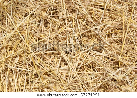 wheat residues background