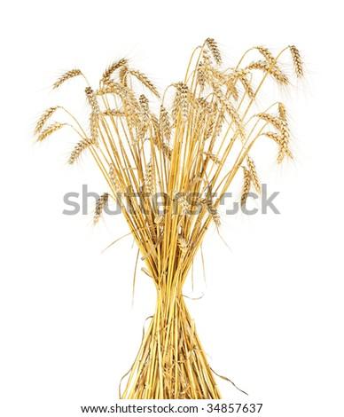 wheat sheaf isolated - stock photo