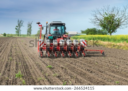 wheat sowing in the spring