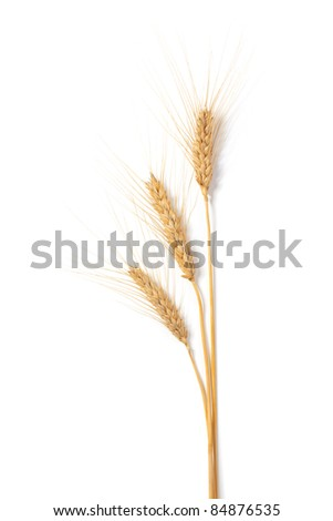 Wheat stems, on white background