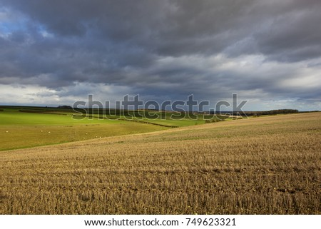 wheat stubble fields and meadows with sheep in a yorkshire wolds agricultural landscape under stormy autumn skies