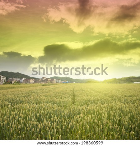 Wheat village