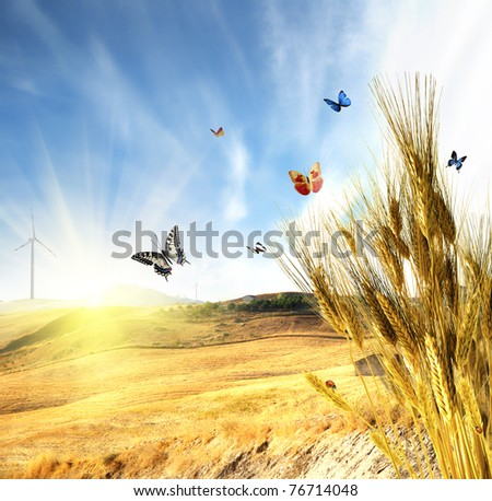 Wheat with butterfly and ladybug - stock photo
