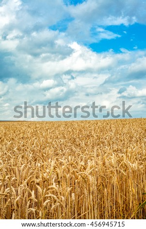 Wheats in Field