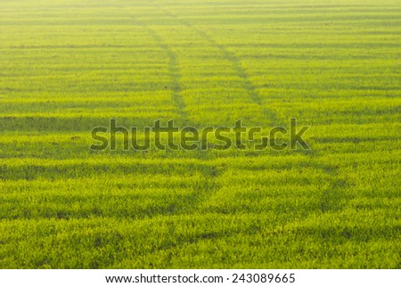 wheel prints on agricultural field - stock photo