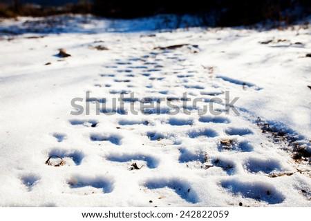 Wheel tracks on the snow - stock photo